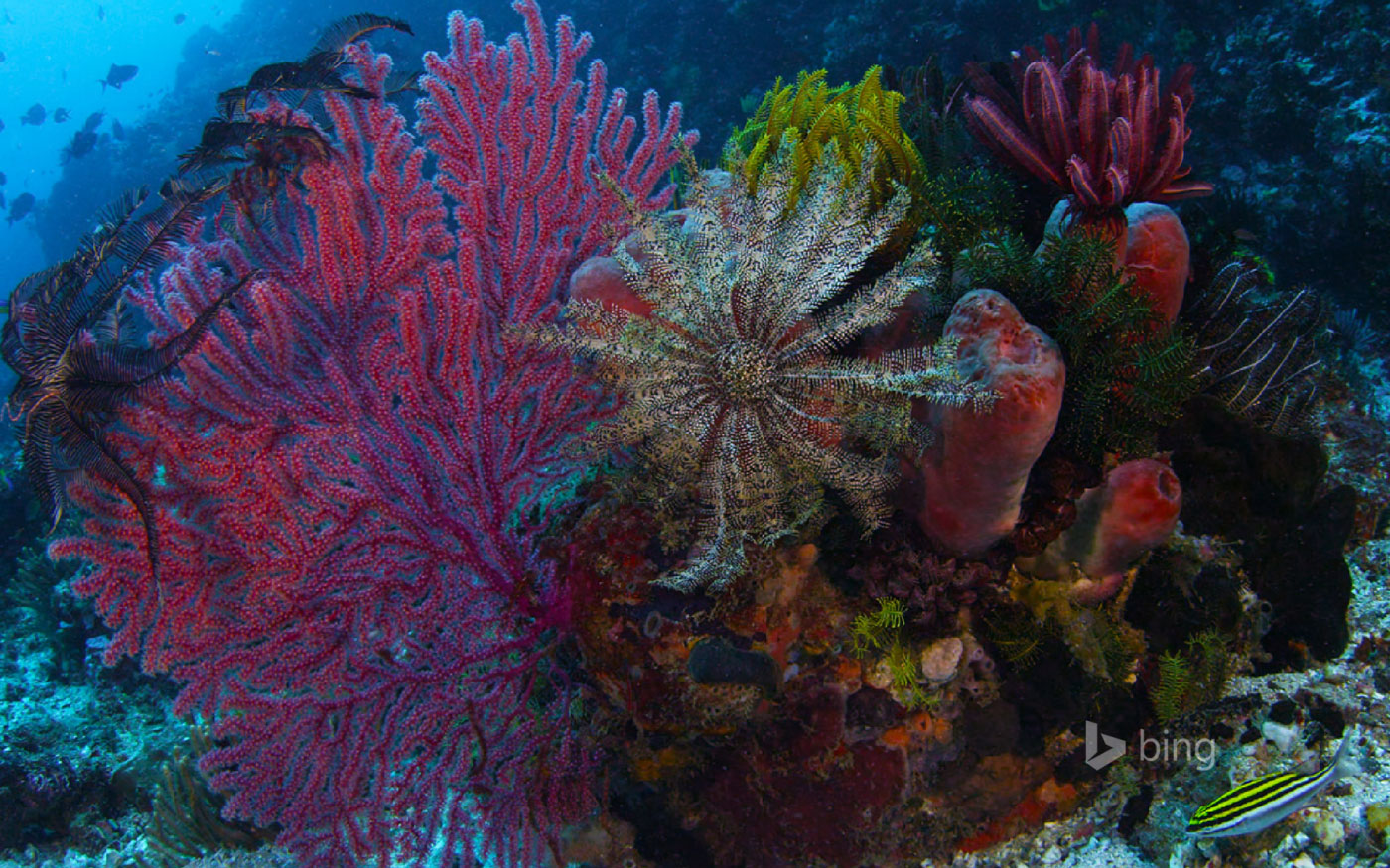 marine ecosystems coral reefs essay What makes up marine ecosystems environmental sciences  marine ecosystems include oceans, coral reefs,  take a look at what our essay writing service can do for.
